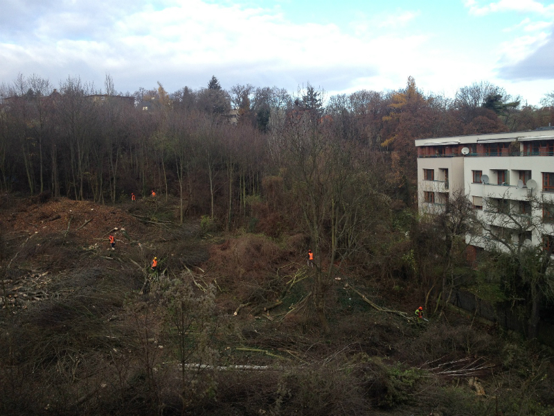 Dolní stavba - developer začal kácet stromy (26. 11. 2013)