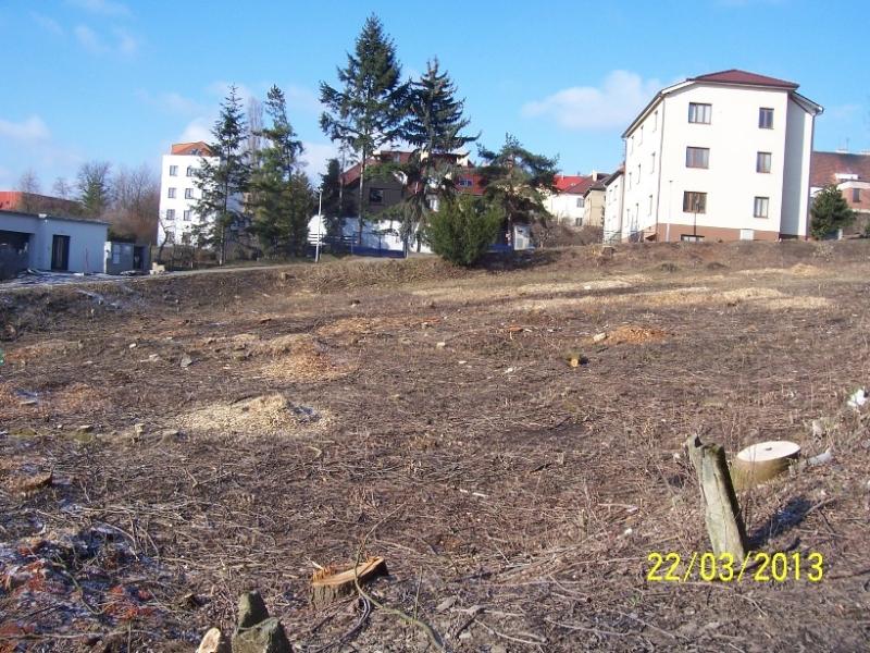Stromy byly vykáceny (autor: Drahomír Bárta, 22. 3. 2013)