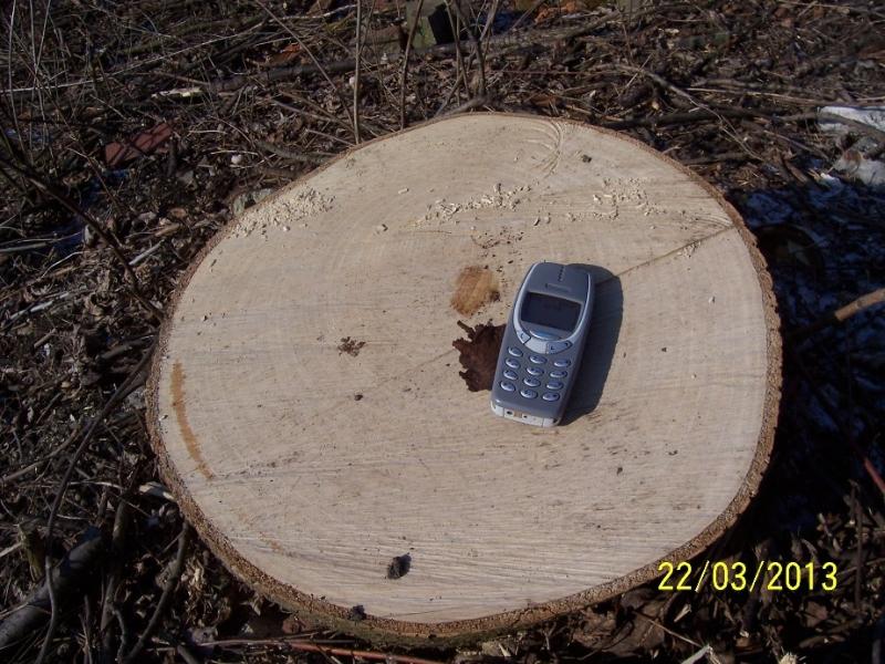 Pokácené stromy měly průměr kmene přes 40 cm, rostly tu desítky let (autor: Drahomír Bárta, 22. 3. 2013)